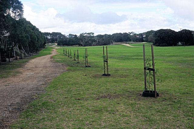Over 70 trees planted in Civic Reserve and nearby locations